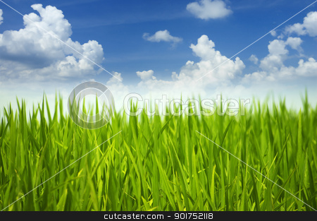 Green grass and sky. stock photo, Green grass and sky in a morning. by szefei
