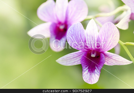 Purple orchid. stock photo, Purple orchid with shallow depth of field. by szefei