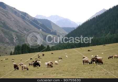 Mountain pastures. stock photo, Travel on mountains and rivers of Kyrgyzstan. by Yury Ponomarev
