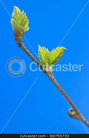 Green sheet. stock photo, Small green sheets on a  blue background. by Yury Ponomarev