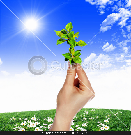 Hands holding green sprouts stock photo, Hands holding green sprouts and sunny sky by Sergey Nivens