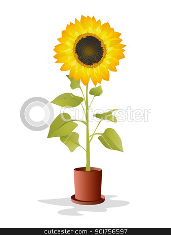 Potted sunflower stock vector clipart, Sunflower in a pot over white background by Richard Laschon