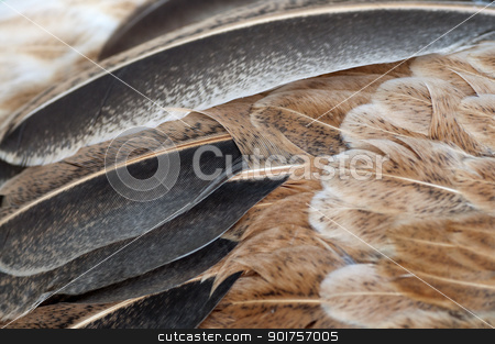 Macro feathers stock photo, Macro shot feathers of a brown chicken. by szefei