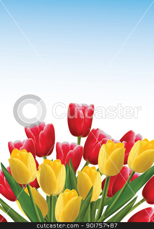 Tulips stock photo, Red and yellow tulips isplated on blue background by Diana