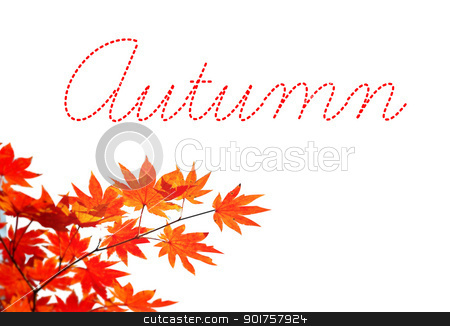 Autumn stock photo, Autumn yellow leaves by Diana