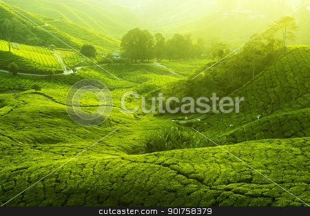 Tea Plantations stock photo, Tea Plantations at Cameron Highlands Malaysia. Sunrise in early morning with fog. by szefei
