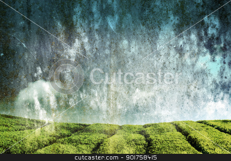 Tea Plantations stock photo, Tea Plantations at Cameron Highlands Malaysia. by szefei