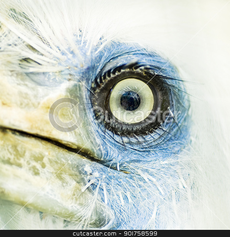 bird eye closeup  stock photo, bird eye closeup   by szefei