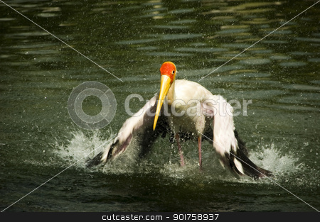 stork  stock photo, stork  by szefei