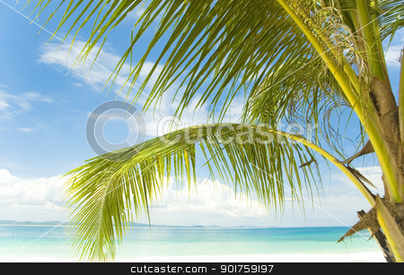 Summer holidays.  stock photo, Palm tree, white sand and turquoise sea   by szefei