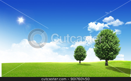Two trees stock photo, Two green trees in the field by Diana