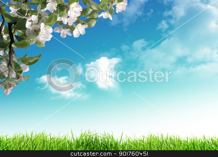 Blooming tree stock photo, Blooming tree on sky background by Diana