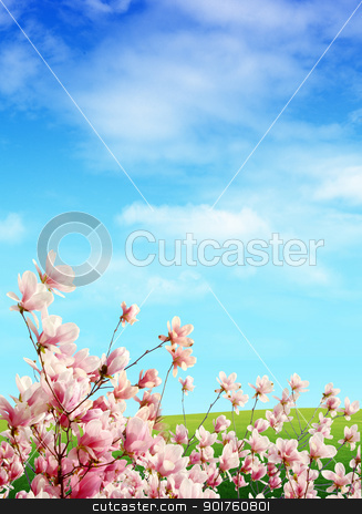 Nature stock photo, Pink flowers on sky background by Diana