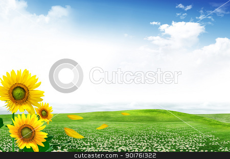 Sunflowers stock photo, Field of flowers of sunflowers by Diana