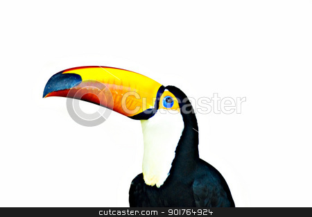 toucan  stock photo, colorful toucan with white background   by szefei