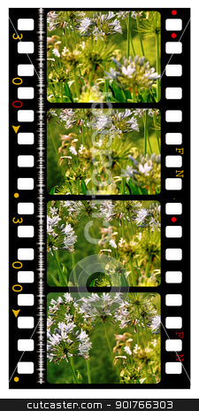 35mm Film  stock photo, 35mm Film frames by Janaka Dharmasena