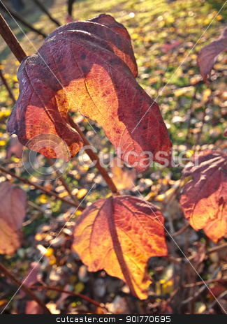 Leaves stock photo, autumn background by Vanessa GF
