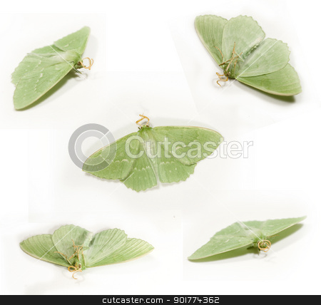 green butterfly on the white background stock photo, green butterfly on the white background by Sarka