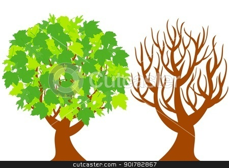 vector illustration of the two trees represent of different seasons  isolated on white background. stock vector clipart, vector illustration of the two trees represent of different seasons  isolated on white background. by trina