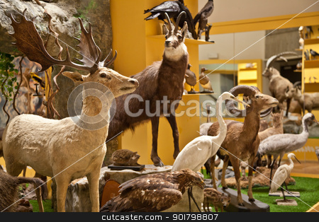Nature Museum interior stock photo, Italy, interior of a very old nature and science museum by Perseomedusa