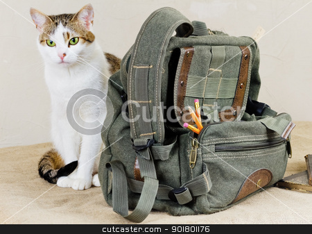cat and bag stock photo, cat and bag by Sergej Razvodovskij