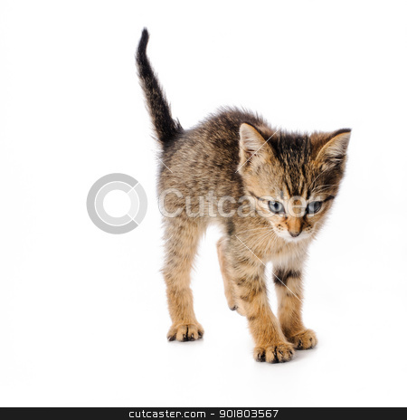Scared striped kitten stock photo, Fanny striped kitten isolated on white background by nvelichko