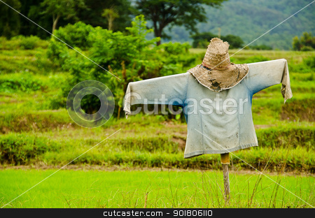 Thai Scarecrow in rice green field  stock photo, Thai Scarecrow in rice green field  by moggara12