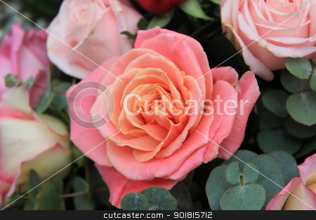 orange pink rose stock photo, double toned rose in shades of orange and pink by Porto Sabbia