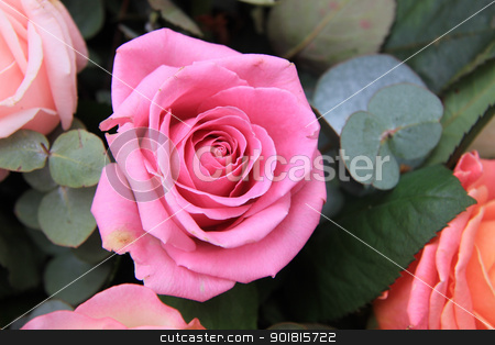 pink rose close up stock photo, Big pink rose, part of mixed floral rose arrangement  by Porto Sabbia