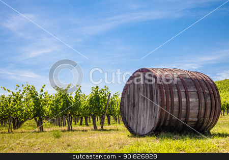 Tuscany wineyard stock photo, Italy, Tuscany region,  Chianti area. Chianti wineyard during a sunny day of summer by Perseomedusa