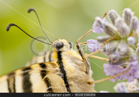 butterfly in the field stock photo,  wild butterfly among the flowers of the garden by luiscar