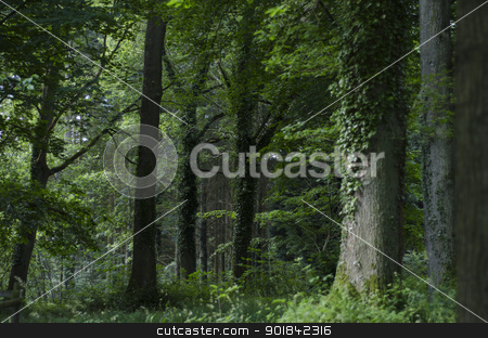 Majestic English Woodland stock photo, Mixed forest in an English park. by TheFull360