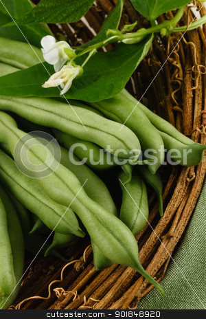 Fresh Green Beans stock photo, Garden fresh green beans, also known as string beans or runner beans, are a healthy vegetable and part of a nutritious diet. by Karen Sarraga