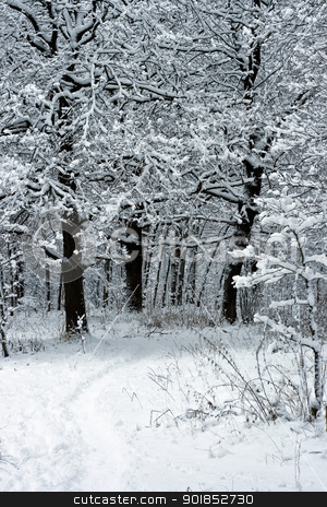 Winter Trees stock photo, winter trees under white snow, Moscow, Russia by Alexey Popov