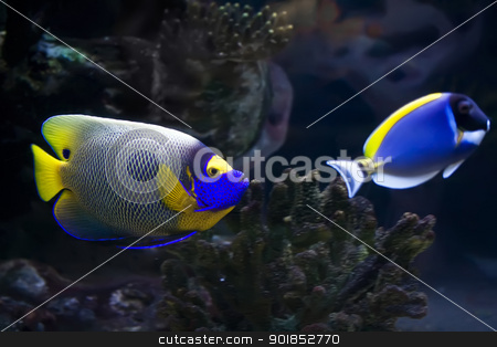 Fish stock photo, Beautiful exotic tropical fishes under water by Alexey Popov