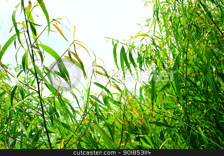 Plants stock photo, Bright green plants surrounding a flawless light blue sky. by Cassidy