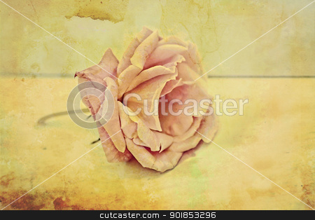 Pink rose vintage background stock photo, Pink rose vintage background by Juliet Photography