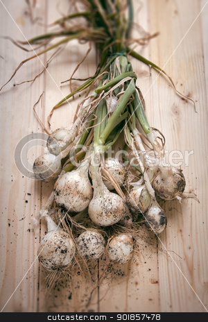FRESH-PICKED ONIONS stock photo, Fresh picked onion on clearly wood table by Giordano Aita
