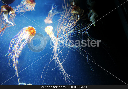 Jelly Fish stock photo, Some swimming Jelly fishes in deep, blue water. by Michael Osterrieder