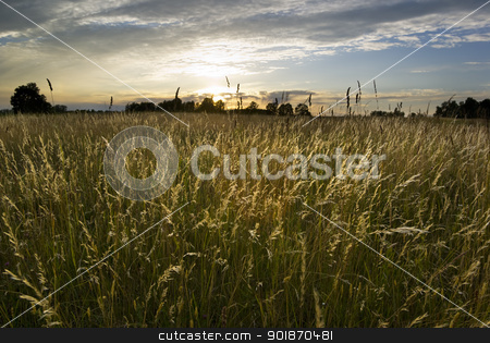 Meadow land. stock photo, Sun setting over the wild grasses,  by Piotr Skubisz
