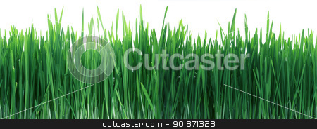 Green Grass Panorama Seamless Tile Tiling Repeating Isolated stock photo, High Width Panorama Of Green Grass Close Up That Seamlessly Tiles Horizontally Isolated On White by Matt Jones