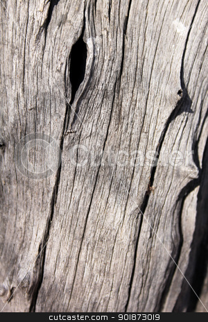 Tree Trunk Background stock photo, Rough Grooved Bushveld Tree Trunk Background by Snap2Art