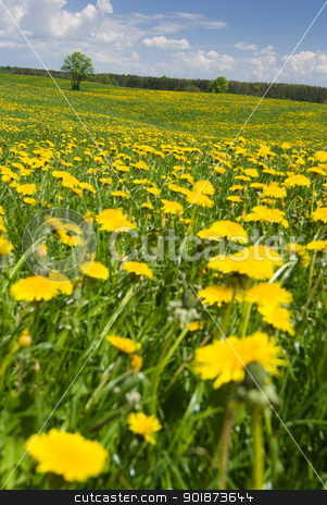 Spring landscape. stock photo, Spring landscape - dandelions fields, sunny weather. by Piotr Skubisz