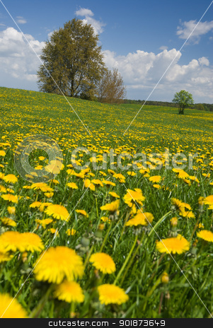 Spring landscape. stock photo, Spring landscape - dandelions fields, trees and sunny weather. by Piotr Skubisz