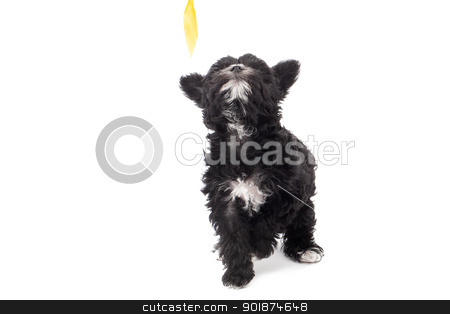 image of a black hairy dog stock photo, image of a black hairy dog by Rusu Grigore