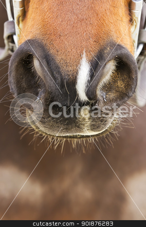 Horse Nostrils stock photo, A closeup view of a horses nostrils by Walter Arce