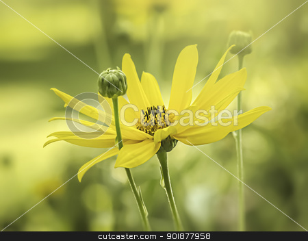 yellow flower mood stock photo, An image of a yellow flower moody background by Markus Gann