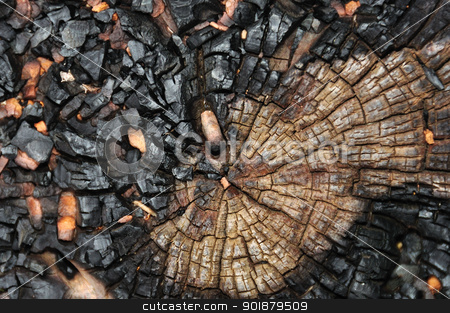 charred tree trunk stock photo, Charred tree trunk macro abstract wood background. Selective focus. by sirylok