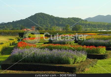 flowers garden  stock photo, flowers in the tropical garden  by kongsky