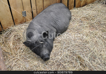Decorative pig stock photo, Decorative pig by galkinvladimir